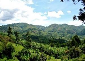 bwindi-national-park