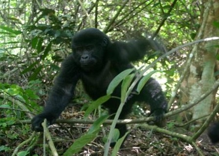 Plan your Gorilla trekking trip with an expert